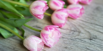 Tulips on gray wooden background